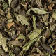 Dammann Touareg Green Tea 50 Teabags 100g