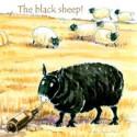The Black Sheep Coaster